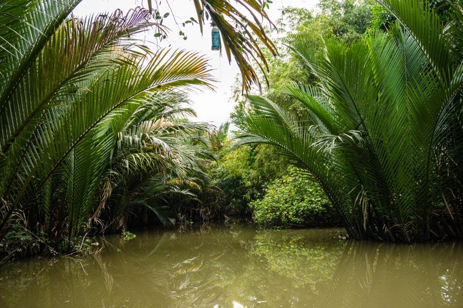 Natur im Mekongdelta