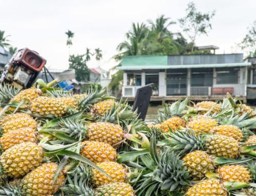 Bootstour ins Mekongdelta