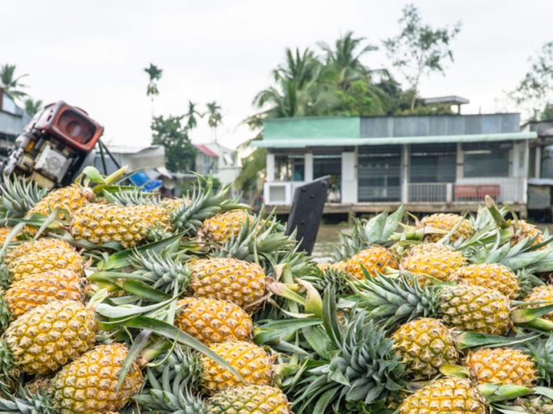 Megongdelta Boot mit Ananas