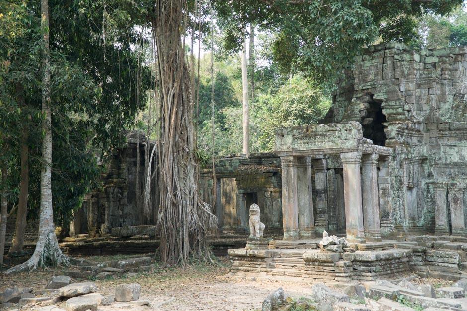 Bewachsener Tempel