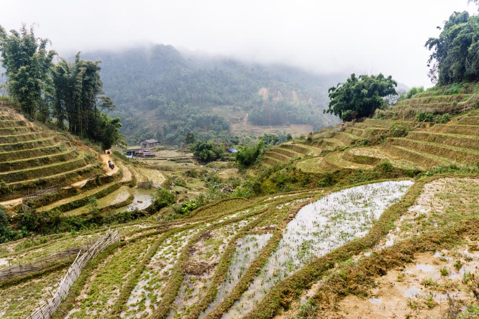 Matschige Reisfelder