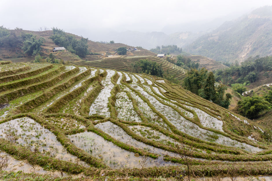 Reisterrassen unterhalb von Sa Pa