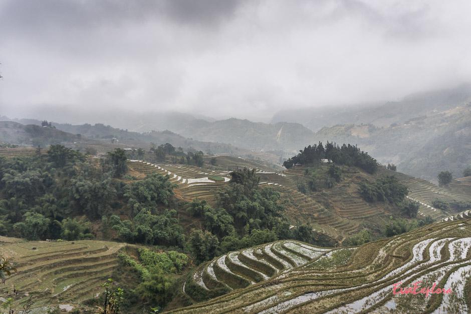 Reisterrassen von SaPa
