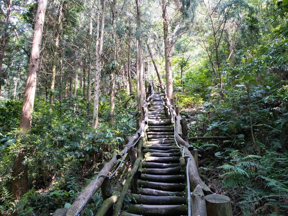 Steile Holzplanken im Wald