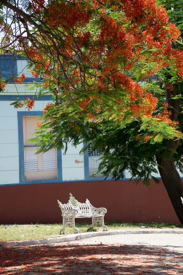 Idylle in Havanna