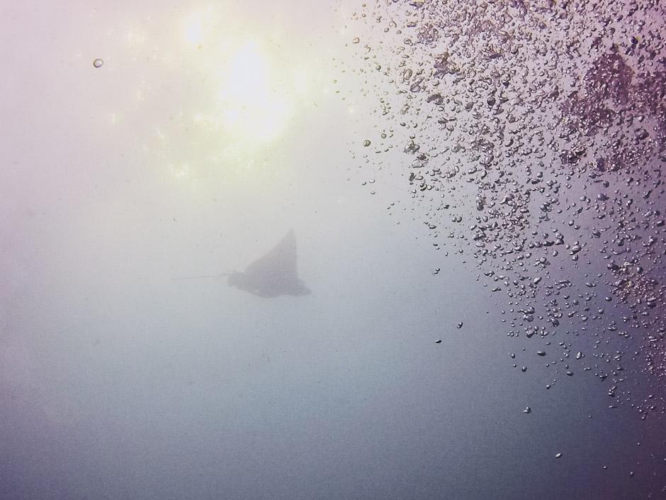 Utila Unterwasserwelt