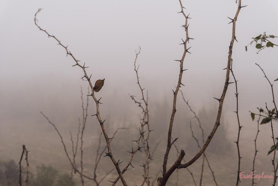 Taj Mahal im Nebel