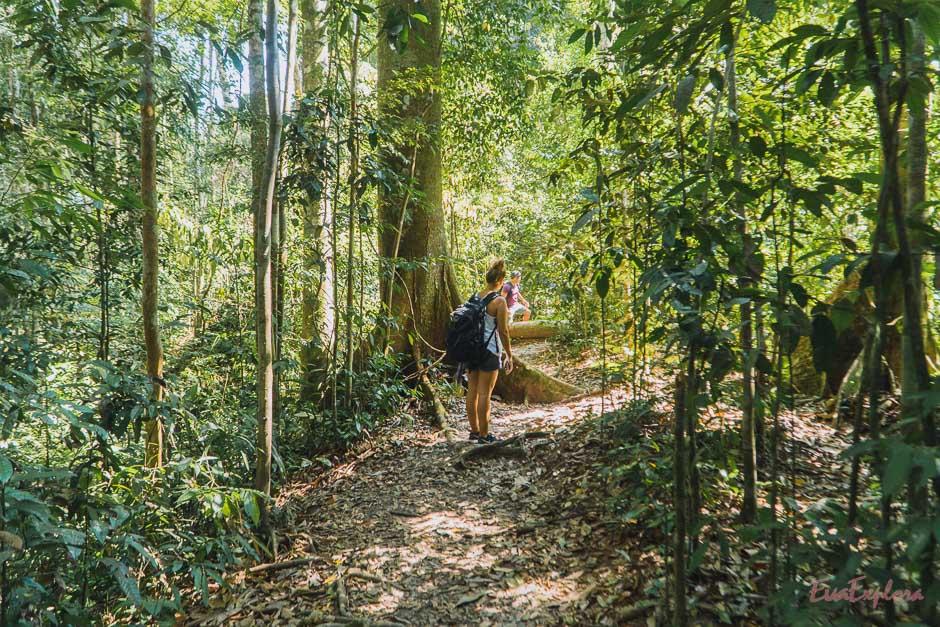 Die Tiefen des Jungles