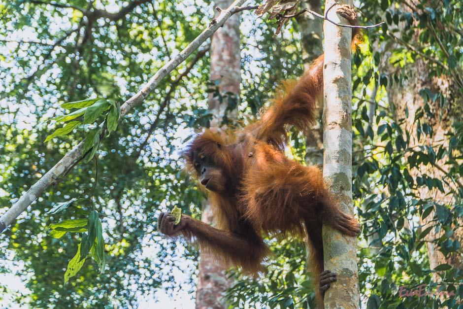 Dschungel von Bukit Lawang