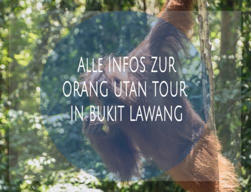 Alle Infos zur Orang Utan Dschungel-Tour in Bukit Lawang