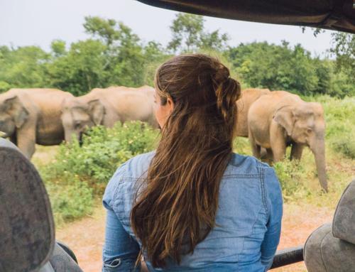 Safari in Udawalawe – glückliche Elefanten in Sri Lanka