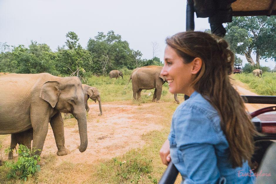 Elefantensafari Sri Lanka