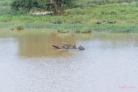 Safari in Udawalawe