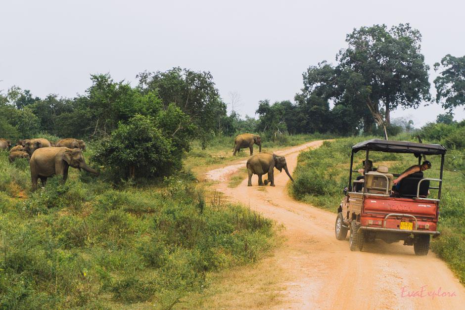 Nationalpark Udawalawe