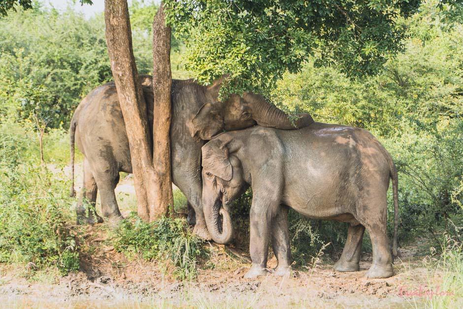 Elefanten beim Schrubben