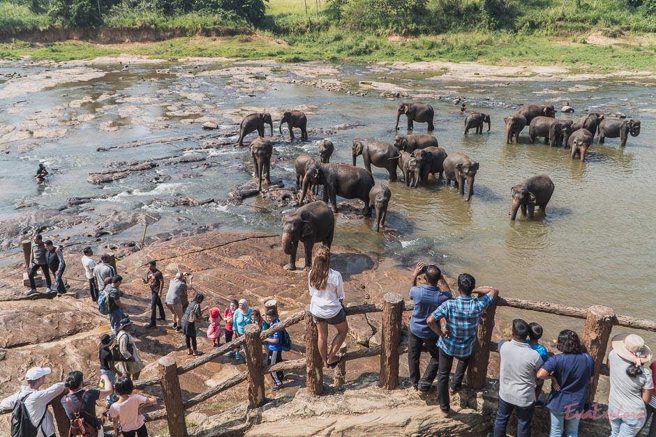badende Elefanten im Fluss Sri Lanka