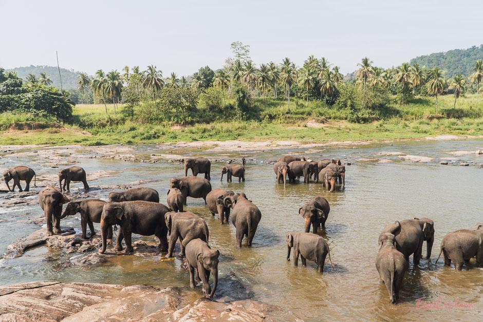 Elefanten baden in Pinnawala