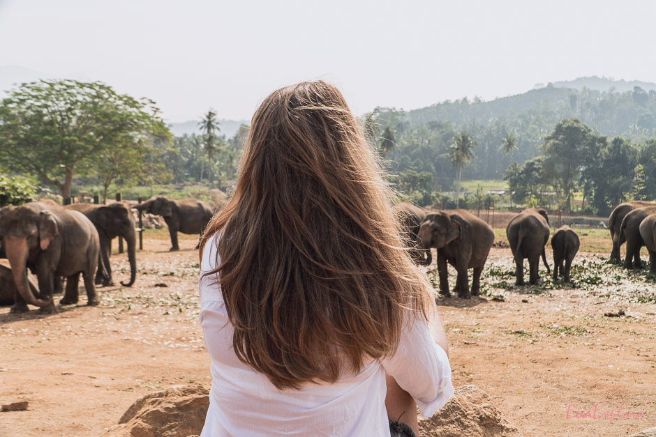 Elefanten auf großem Feld