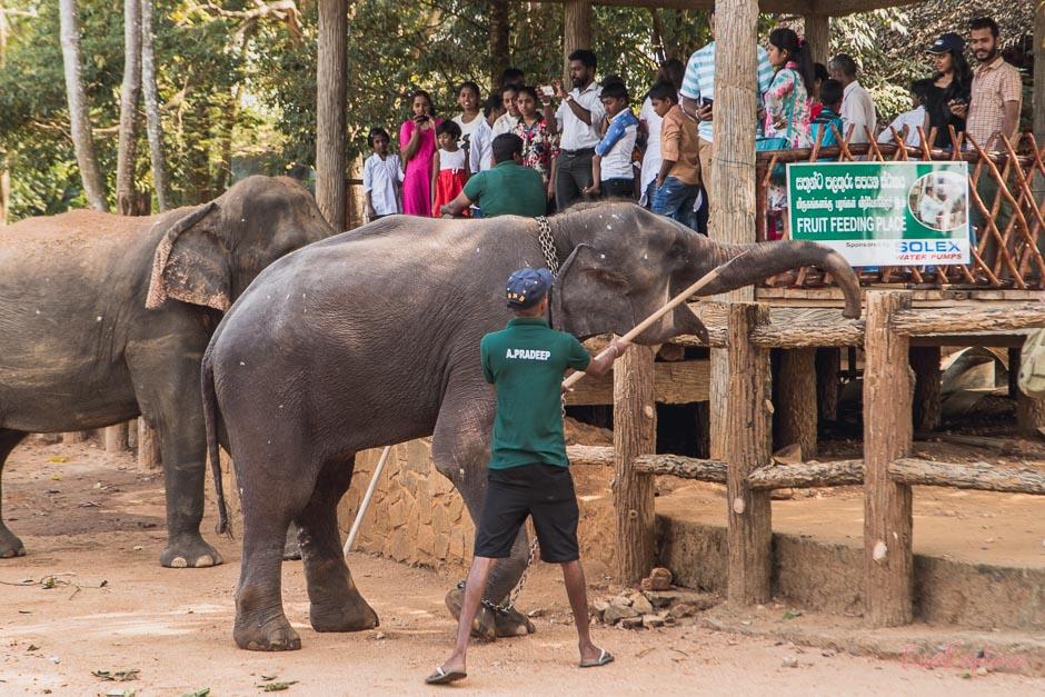Traurige Elefanten