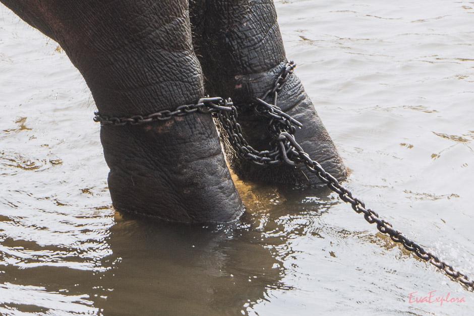 Elefanten Waisenhaus auf Sri Lanka
