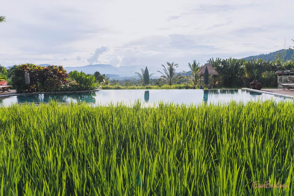 Reisfelder und Pool