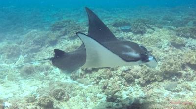 Mantaray Nusa Penida