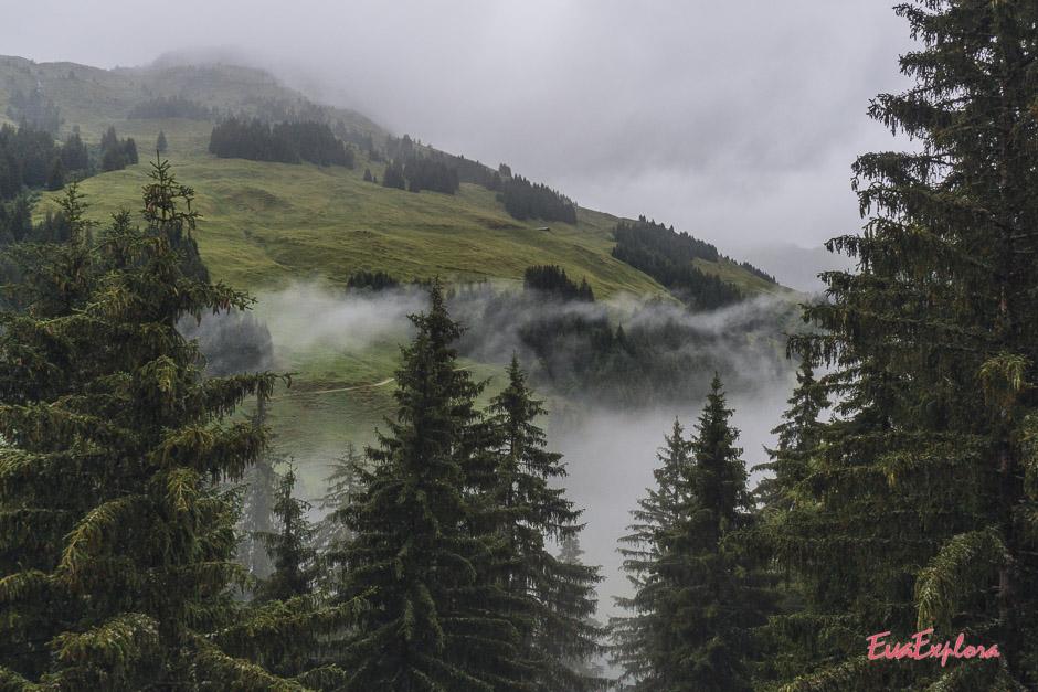 Baumgipfelwanderwerg Saalbach-Hinterglemm