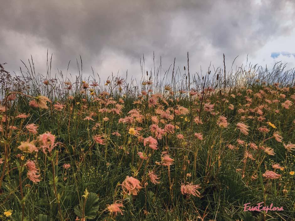 Blumenwiese Saalbach-Hinterglemm