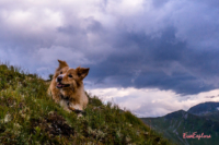 Hund am Hacklberg