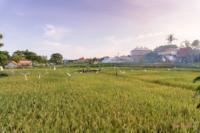 Reisfelder in Canggu