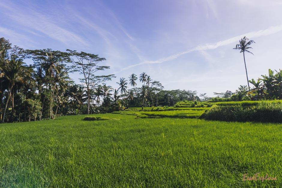 Balis geheime Reisterrassen