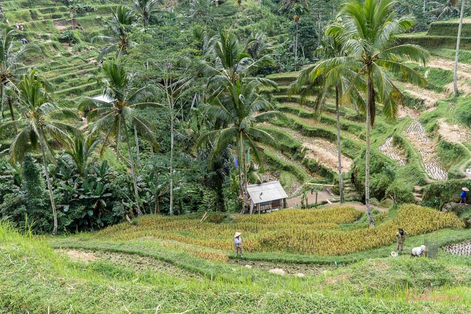 Rundreise Indonesien Insel Bali