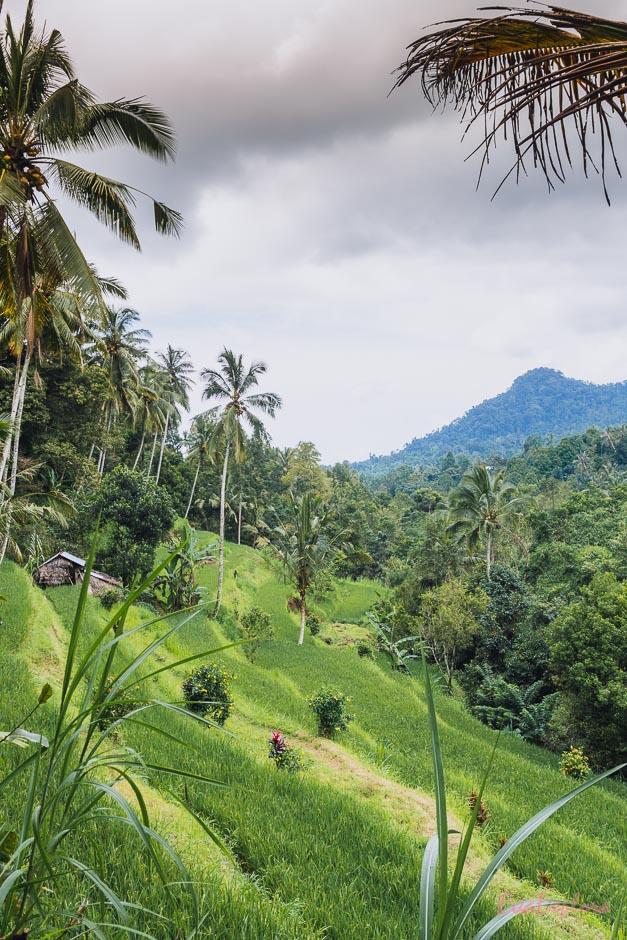 im Norden von Bali