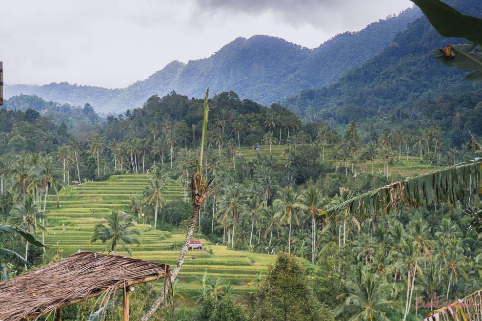 Reisterrassen, Wasserfaelle und Natur