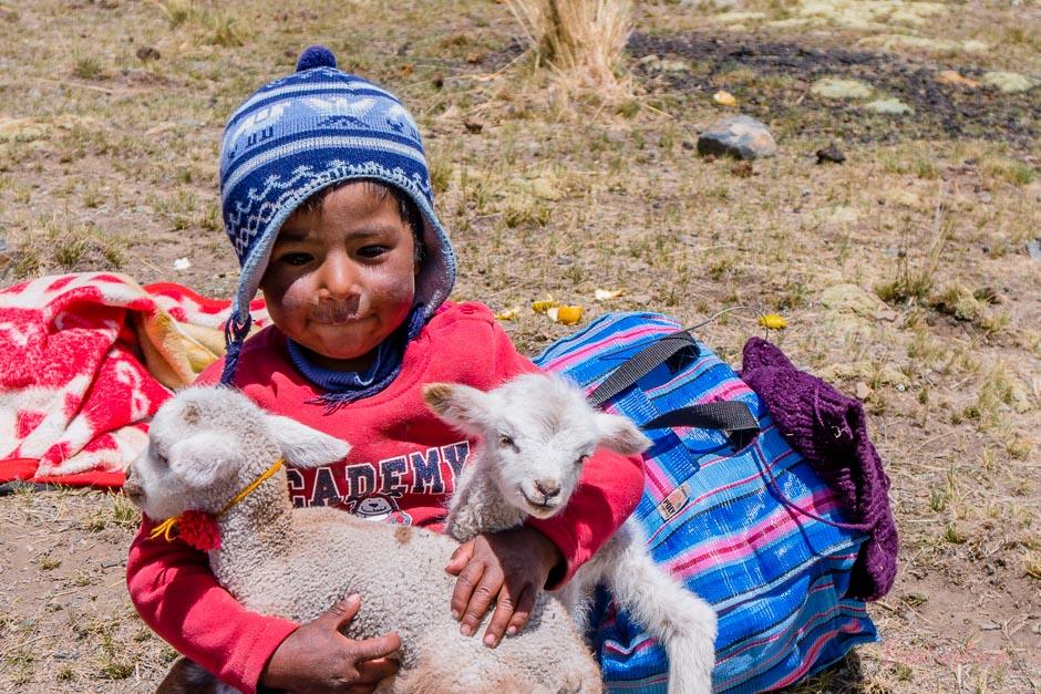 Junge mit Schafen am Pico Austria