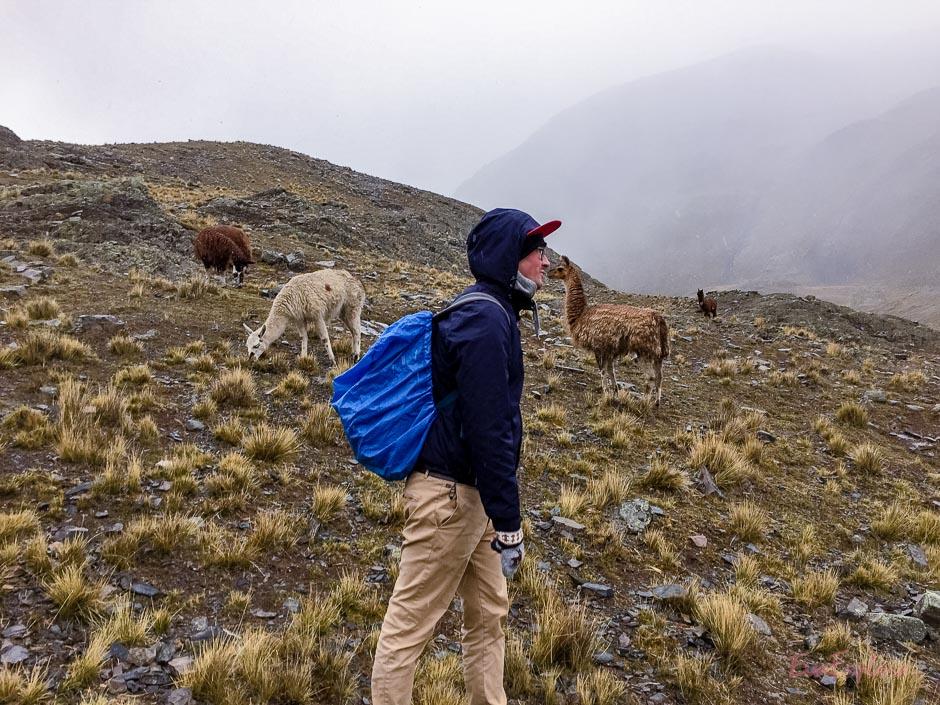 Max und das Lama