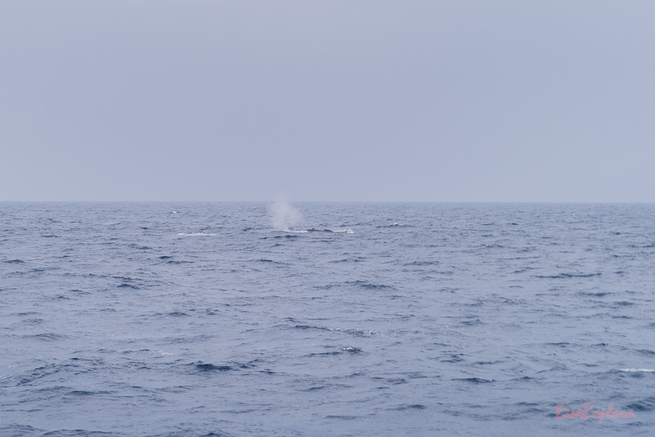 Wale in SriLanka