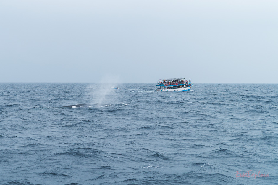 Wale beobachten Sri Lanka
