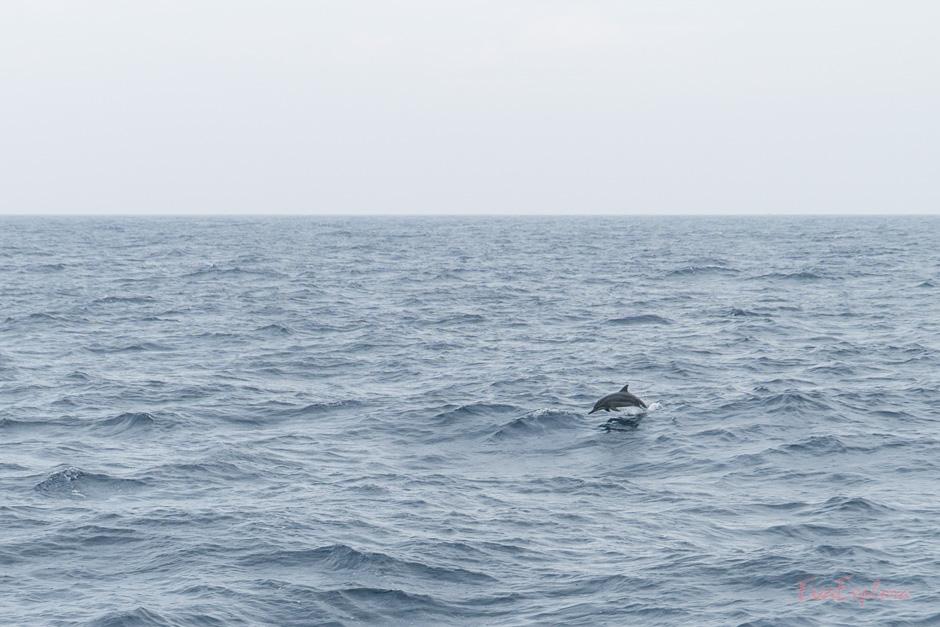Delfine in SriLanka