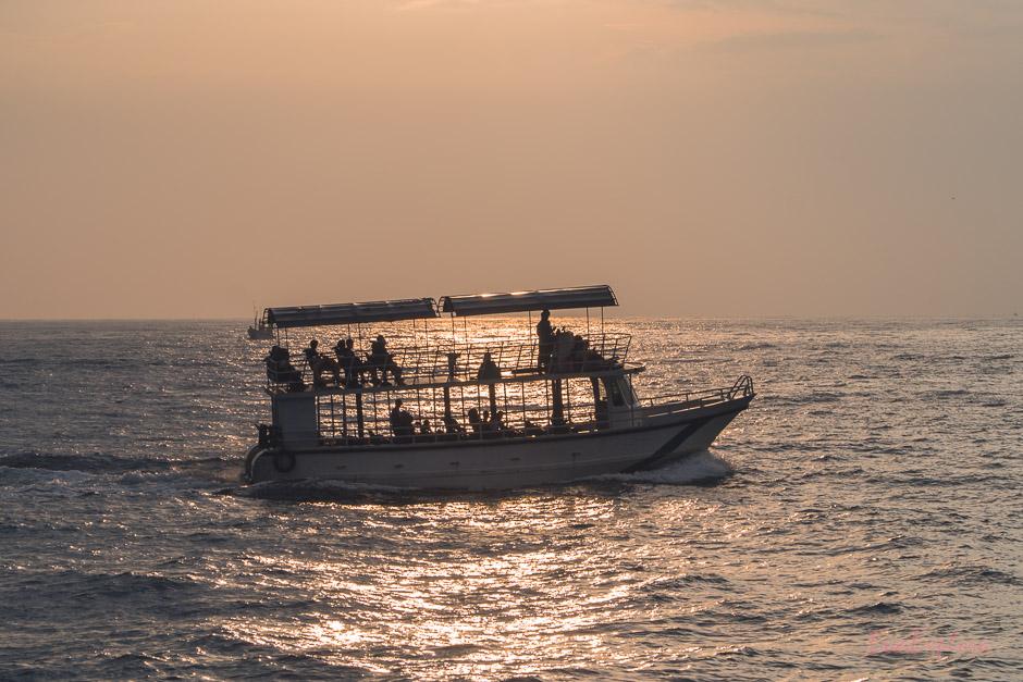Wale beobachten in SriLanka