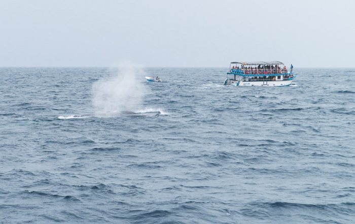 Whale Watching Sri Lanka