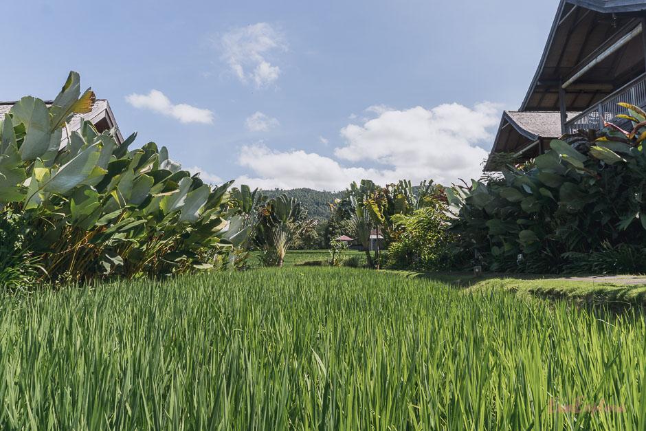 Urlaub auf Bali