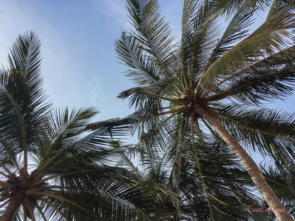 Beachen auf Sri Lanka