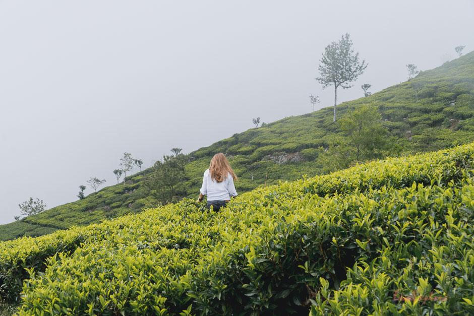 Lipton Seat SriLanka