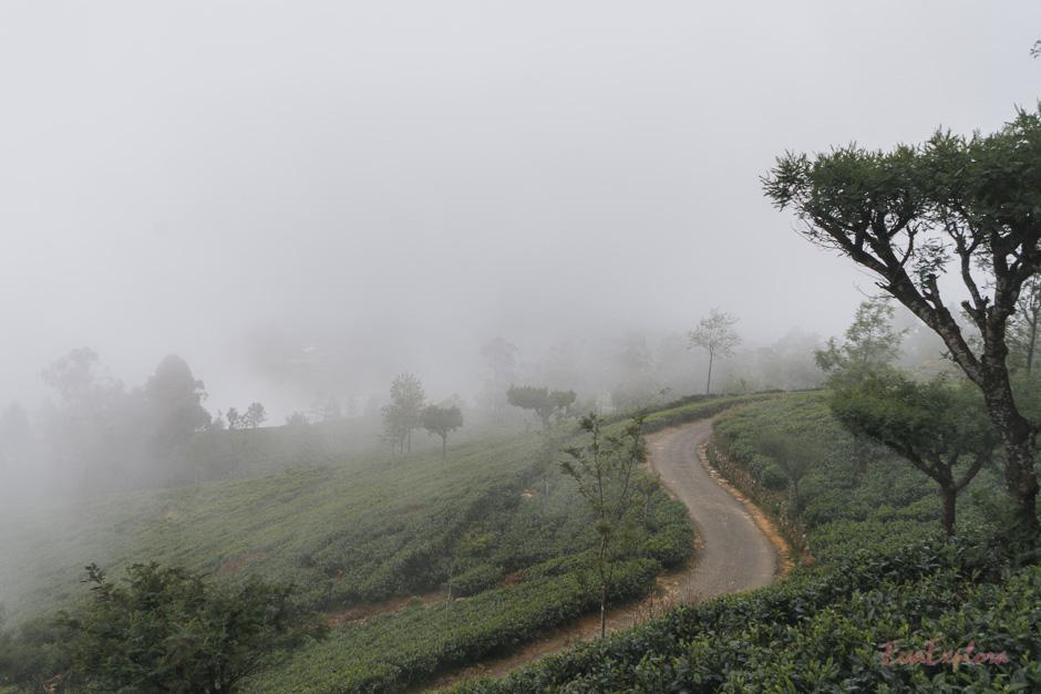 Nebel in Haputale