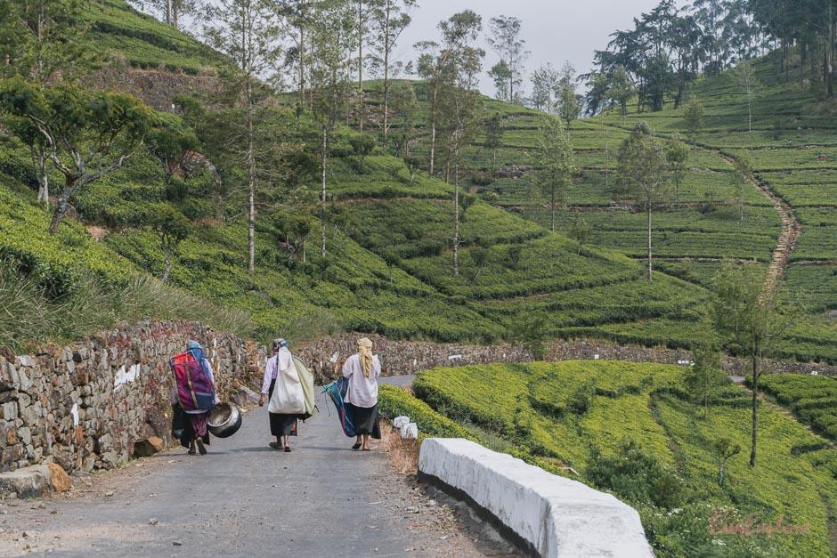 Frauen in Teeplantagen