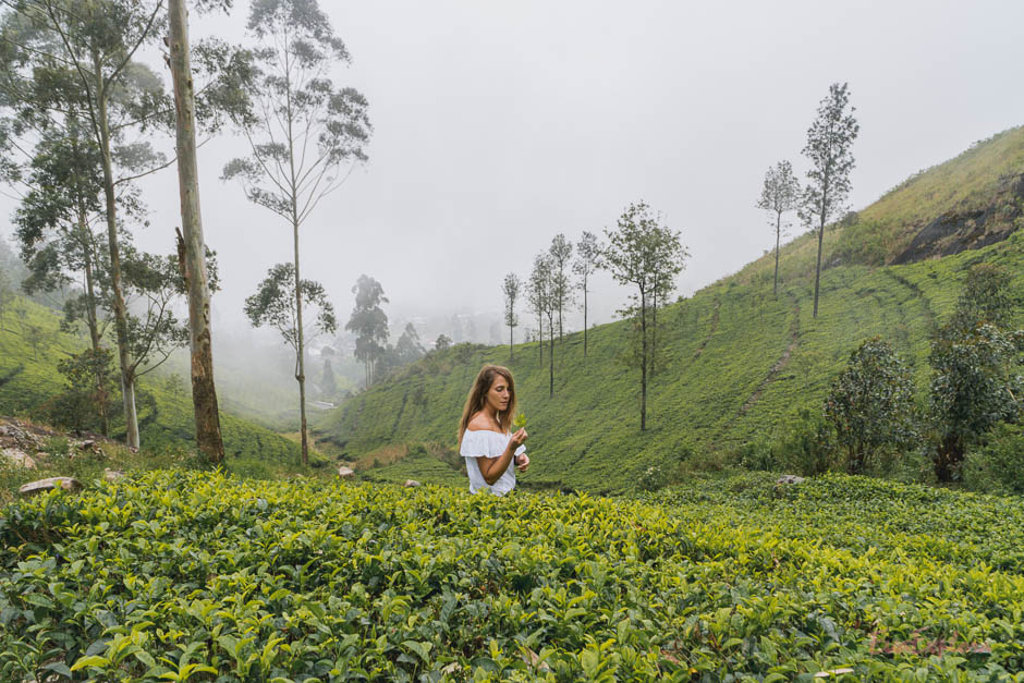 Teeplantage Haputale