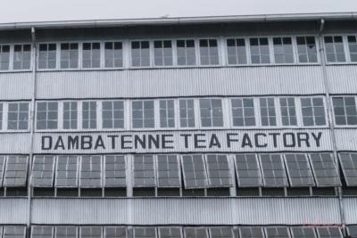 Teefabrik Sri Lanka