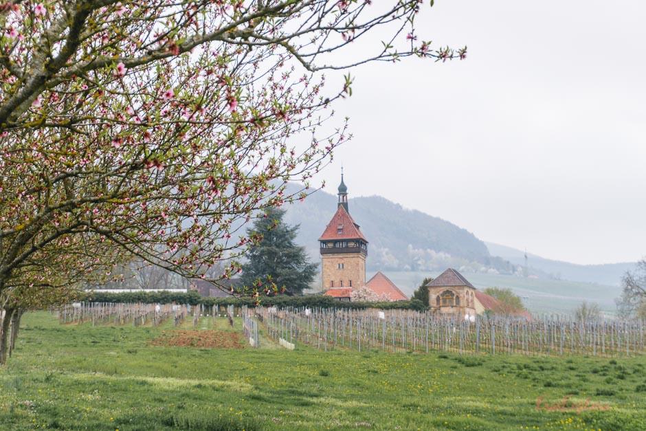 Weinberge bei Siegeldingen
