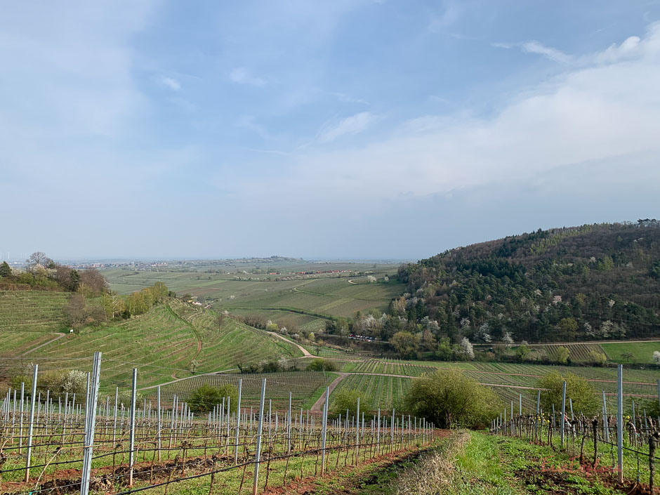 Weinberge in Birkweiler